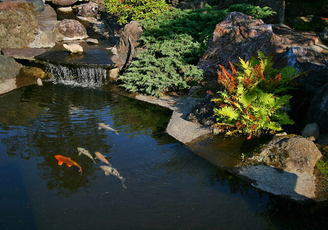Koi pond builder Ocala